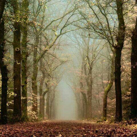بالصور اجمل الصور بدون تعليق , اجمل صور الطبيعه روعه 146 7