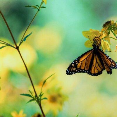 صورة صور الطبيعة , صور طبيعيه حلوه
