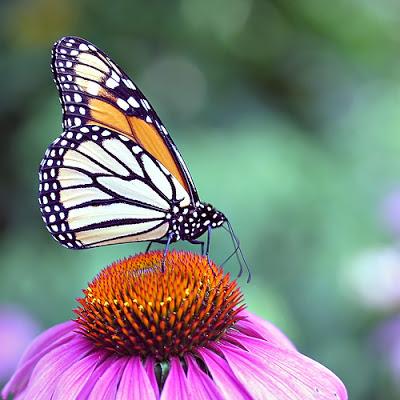صورة صور الطبيعة , صور طبيعيه حلوه 159 4