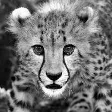 صوره عالم الحيوان , صور حيوانات