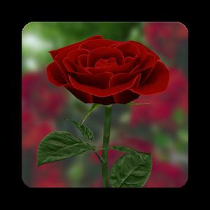صورة اجمل وردة , اروع ورده بالصور سبحان الله