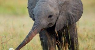 صورة صور حيوانات , صور حيوانات للاطفال