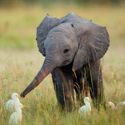 صوره صور حيوانات , صور حيوانات للاطفال