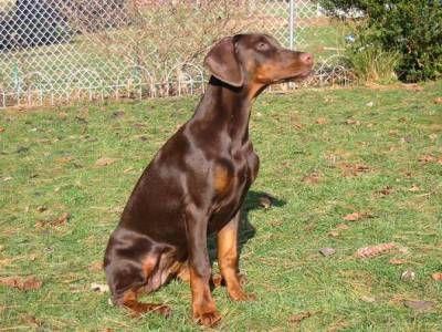 بالصور صور كلاب , انواع الكلاب بالصور روعه 259 10
