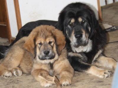 بالصور صور كلاب , انواع الكلاب بالصور روعه 259 13