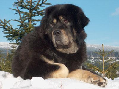 بالصور صور كلاب , انواع الكلاب بالصور روعه 259 14