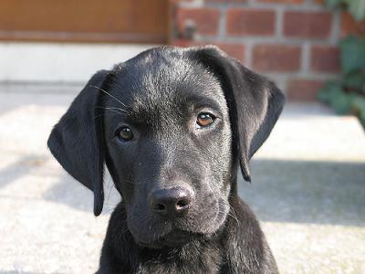 بالصور صور كلاب , انواع الكلاب بالصور روعه 259 2