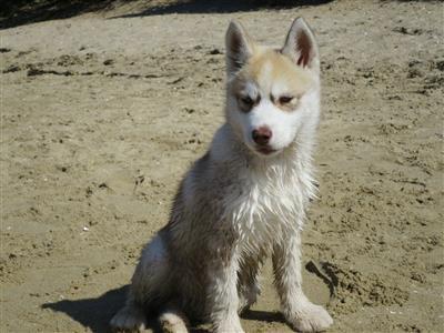 بالصور صور كلاب , انواع الكلاب بالصور روعه 259 4