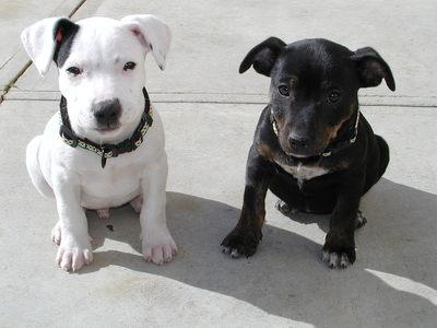 بالصور صور كلاب , انواع الكلاب بالصور روعه 259 7