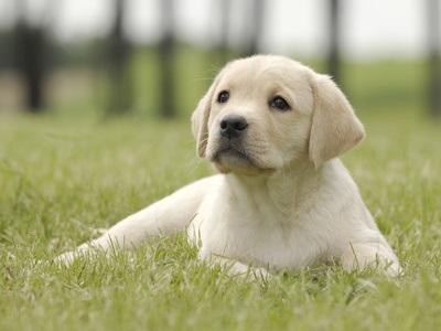 بالصور صور كلاب , انواع الكلاب بالصور روعه 259