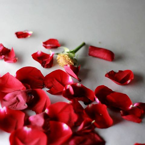 بالصور اجمل الورود الرومانسية المتحركة , ارق مجموعة ورود جميلة 290 8