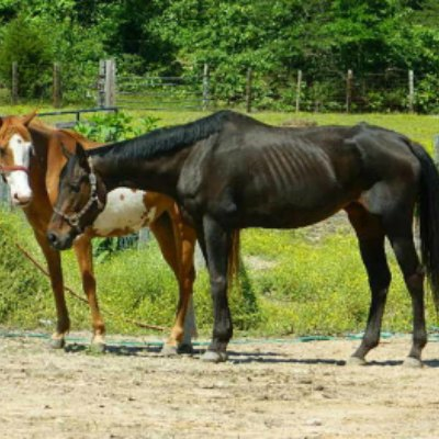 صور اجمل حصان في العالم , اروع احصنه بالصور