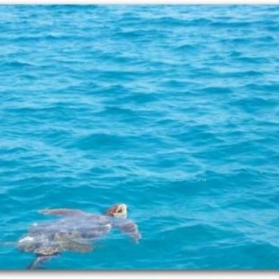 بالصور صور البحر , احلى بحر روعة بالصور 544 4