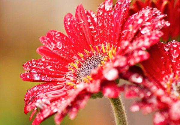 بالصور صور زهور , اجمل زهور بالصور حصرى 560 4