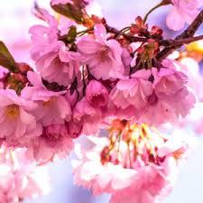 بالصور صور زهور , اجمل زهور بالصور حصرى 560 5