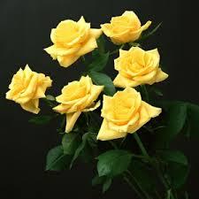 صور صور زهور , اجمل زهور بالصور حصرى