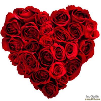 بالصور ورد جوري احمر رومانسي متحرك , صور ورد احمر متحركة حصرى 573 3