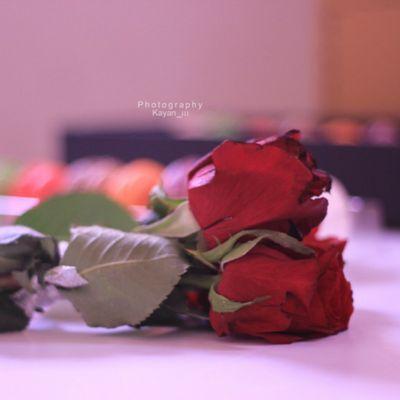 بالصور ورد جوري احمر رومانسي متحرك , صور ورد احمر متحركة حصرى 573 6