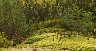 صور طبيعه , اجمل المناظر الطبيعية بالصور