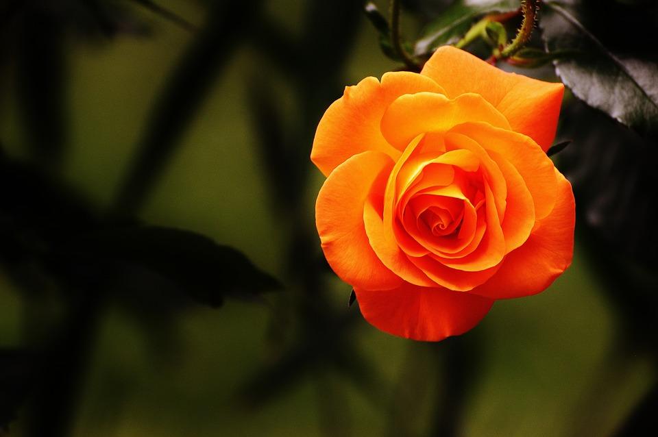 بالصور صور منوعات صور منوعه حلوه , حمل اجمل صور جديد 629 3