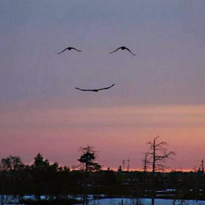 بالصور صورة جميلة ومضحكة , اغرب صور جديد 640 1