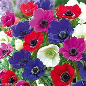 بالصور صور ازهار , مجموعة صور زهور جديدة 642 1
