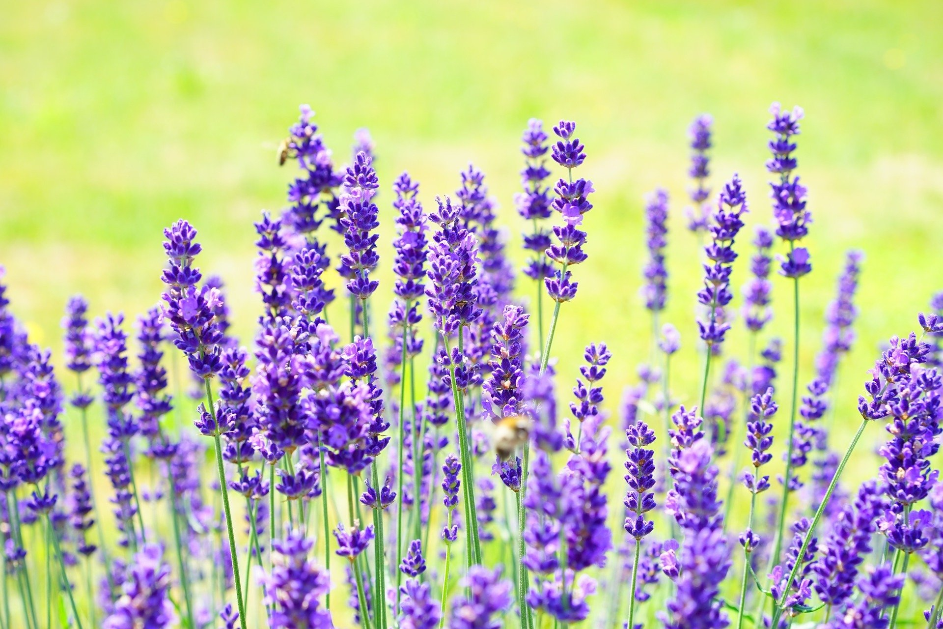 بالصور صور ازهار , مجموعة صور زهور جديدة 642 4