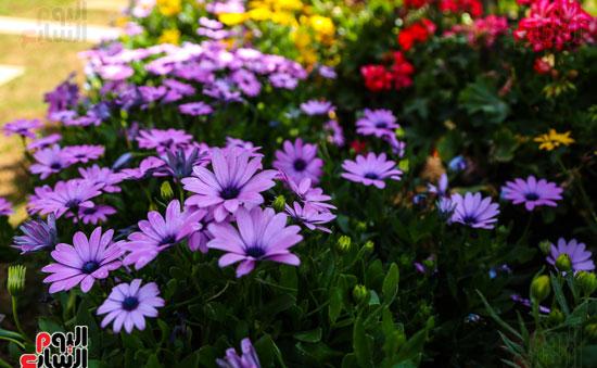 بالصور صور ازهار , مجموعة صور زهور جديدة 642 5