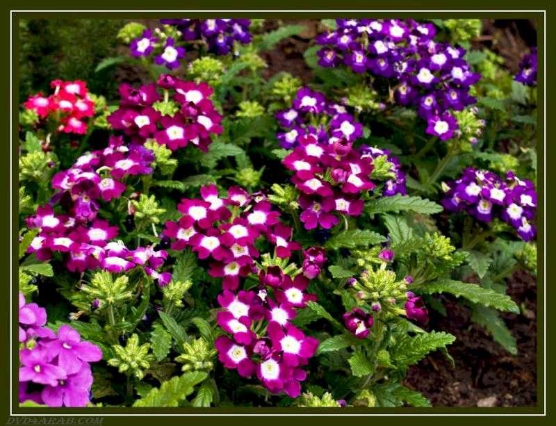 بالصور صور ازهار , مجموعة صور زهور جديدة 642 6