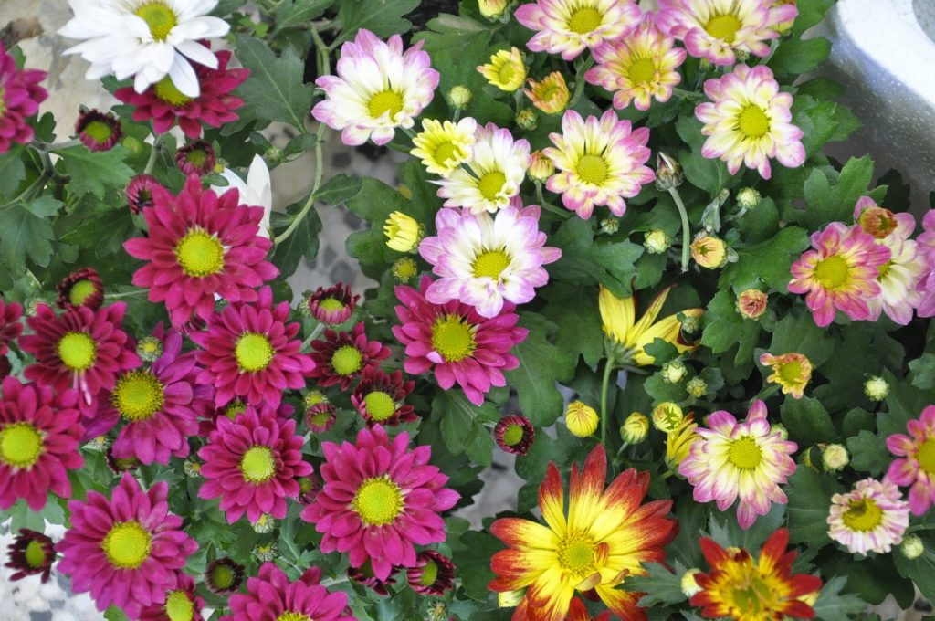بالصور صور ازهار , مجموعة صور زهور جديدة 642 7