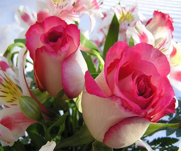 بالصور صور ازهار , مجموعة صور زهور جديدة 642