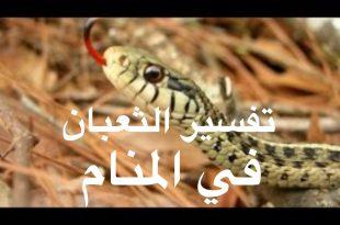 صور رؤية الثعبان في المنام وقتله , تفسير حلم الثعبان وقتله