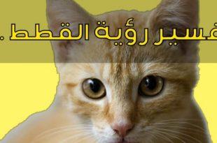 صوره رؤية القطط بالمنام , تفسير رؤية القطة في الحلم