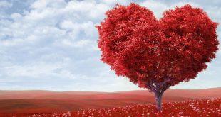 صوره صور قلوب حب , اروع بوستات عليها قلوب رومانسية