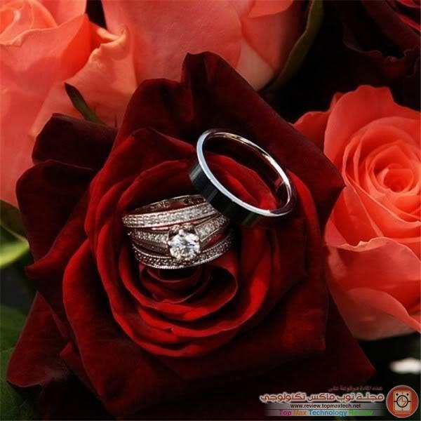 صورة صور ورد رومانسي , صور متنوعة لجمال الورد الرومانسى