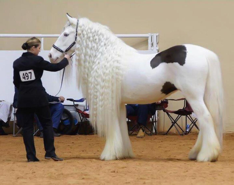 صورة اجمل حصان في العالم , صور طبيعية للحصان