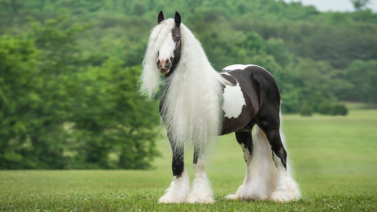 بالصور اجمل حصان في العالم , صور طبيعية للحصان 3739 2