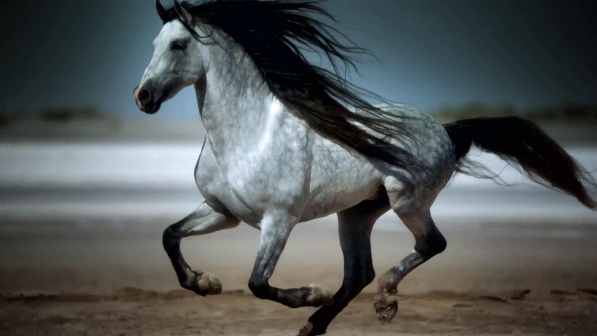 بالصور اجمل حصان في العالم , صور طبيعية للحصان 3739 6