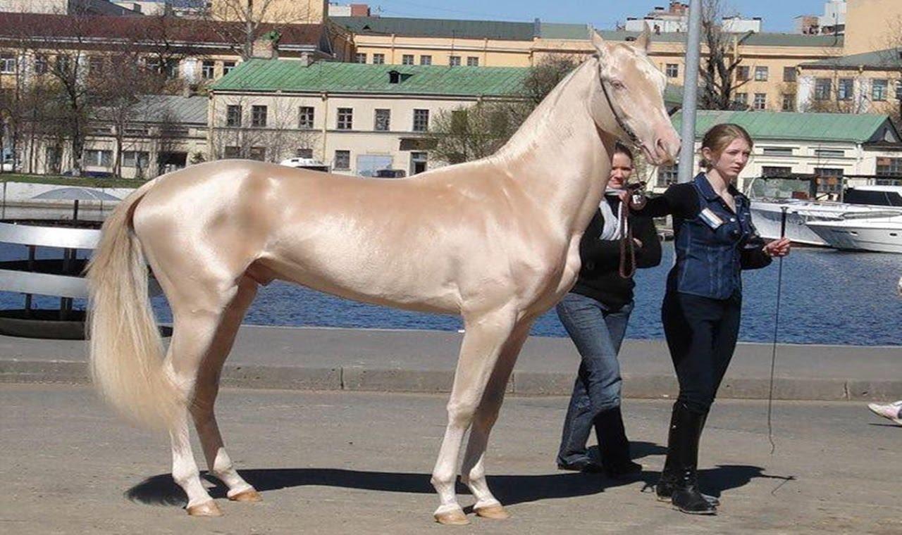بالصور اجمل حصان في العالم , صور طبيعية للحصان 3739 7