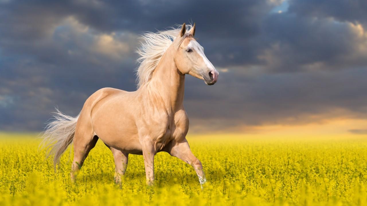 بالصور اجمل حصان في العالم , صور طبيعية للحصان