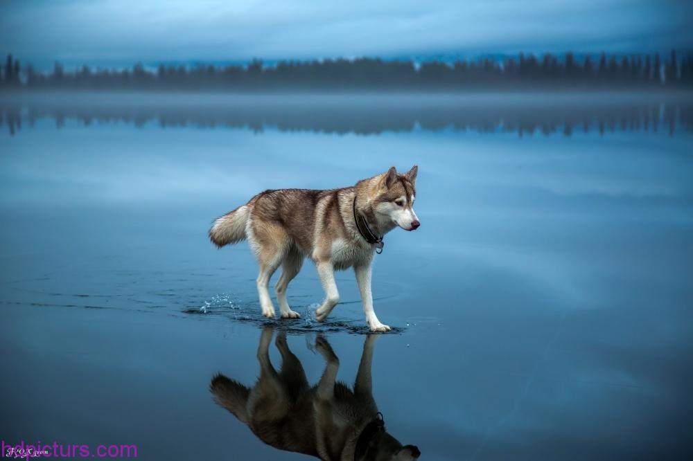 اجمل الصور في العالم احلي صور نادرة في العالم صباحيات