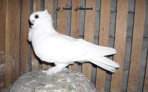 بالصور حمام مصري , اروع صور للحمام المصري 5164