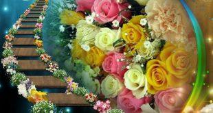 صورة صور ورد صور ورد , احلي صور الورود الرائعة