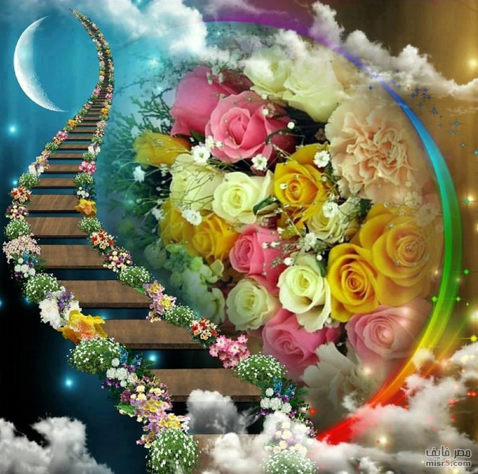 صوره صور ورد صور ورد , احلي صور الورود الرائعة