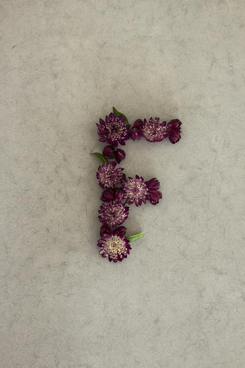 بالصور صور حرف f , كولكشن رائع عن حرف F 3141 7