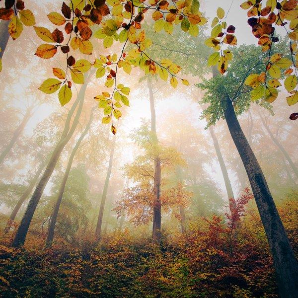 بالصور صور مناظر حلوه , مناظر الطبيعة الخلابة اسرة للروح 3213 3
