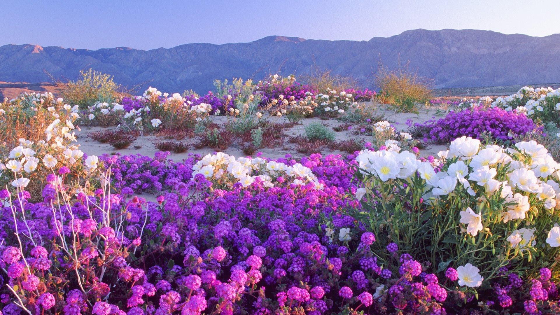 بالصور صور مناظر حلوه , مناظر الطبيعة الخلابة اسرة للروح 3213 9