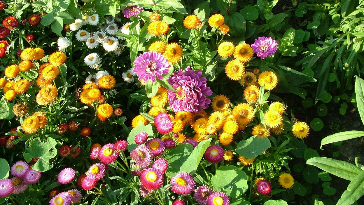 بالصور صور اجمل ورد , صور وقت تزهير الورد رائعة 3224 11