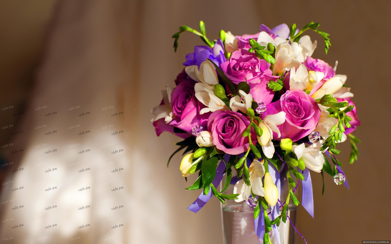 بالصور صور اجمل ورد , صور وقت تزهير الورد رائعة 3224 12