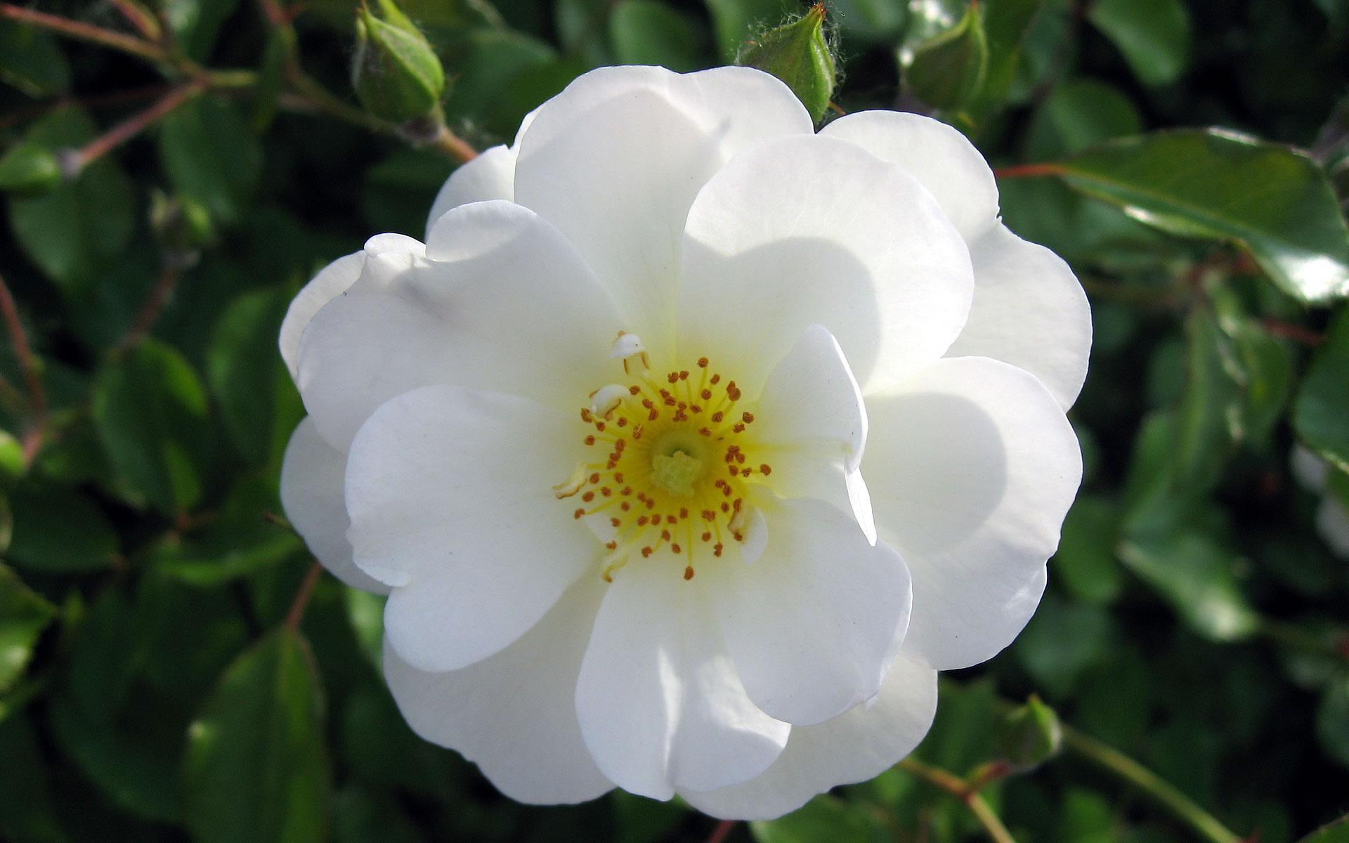 بالصور صور اجمل ورد , صور وقت تزهير الورد رائعة 3224 13